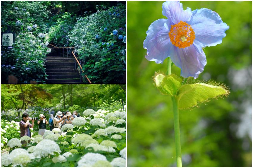 初夏浪漫賞花到神戶就對了!4大風格花園爭奇鬥豔,感受繽紛花朵魅力
