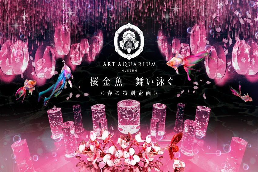 Art Aquarium美術館春季特展「櫻花金魚 翩翩起舞」,粉色櫻花元素營造春天浪漫氛圍超夢幻!