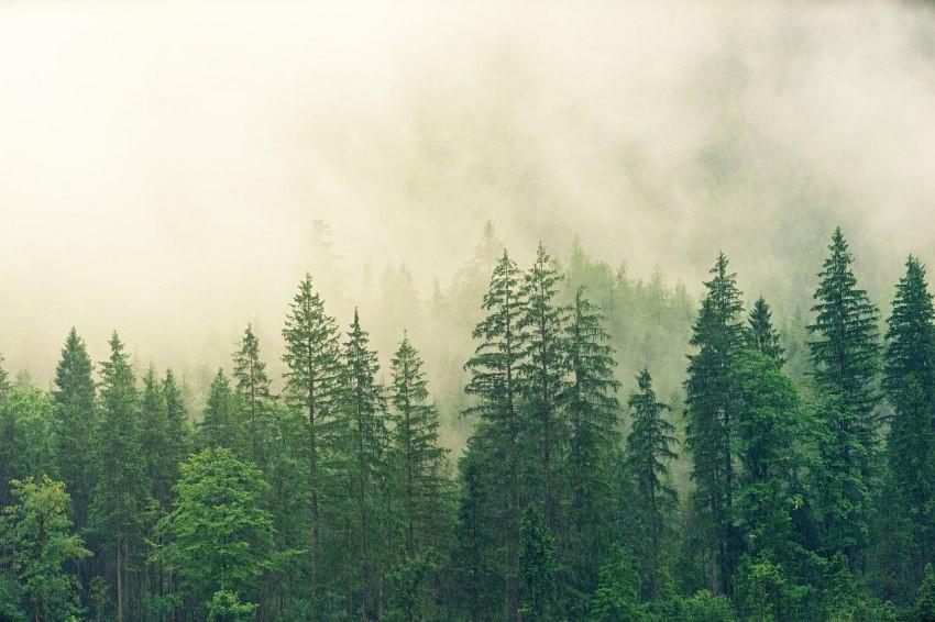 本週新聞精選/《島耕作》系列主角確診新冠肺炎、栃木縣足利市發生嚴重森林大火