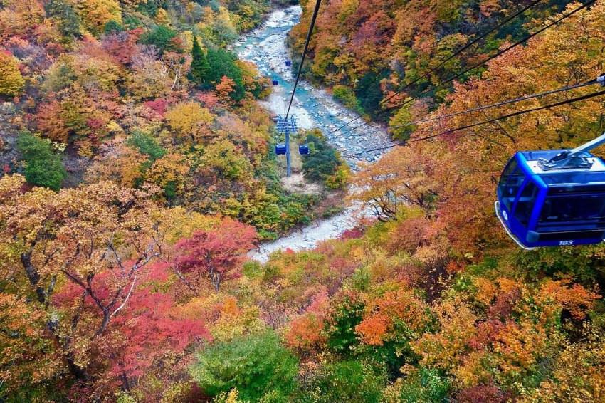先筆記以後再出發,達人級的賞楓景點!滿山滿谷的楓紅就在新潟的苗場滑雪場,隨手一拍都是美照!
