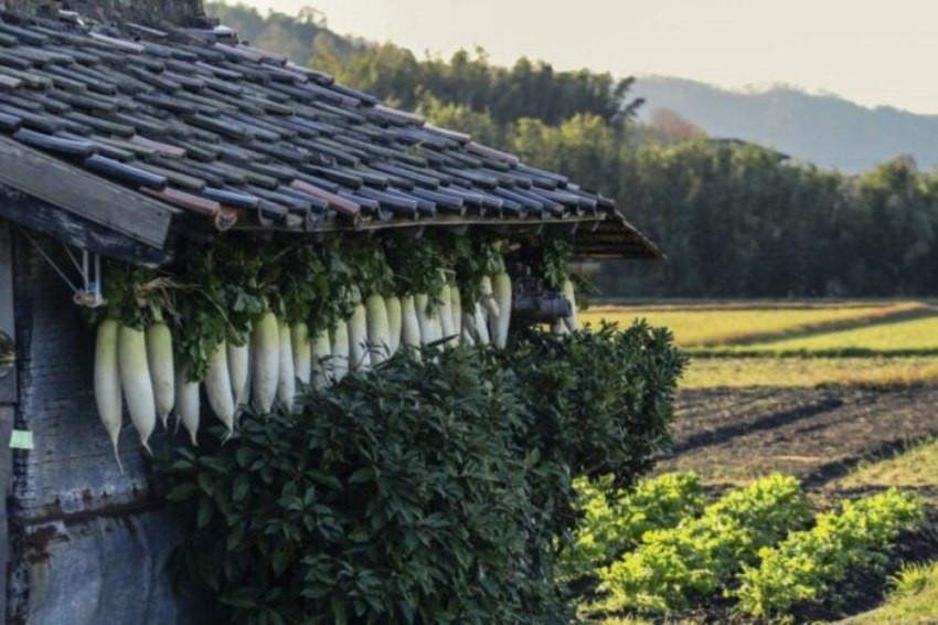 日本十二月喝蘿蔔湯是為什麼?冬天京都寺院的古老傳統「大根焚」