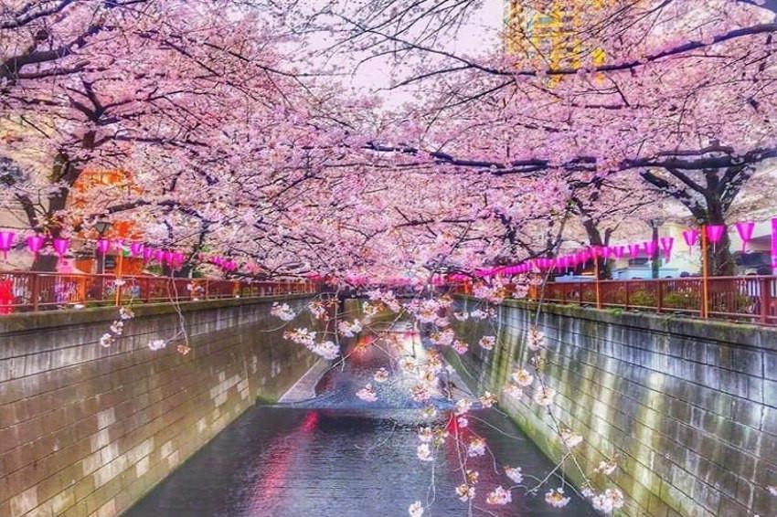 徵稿活動/想念日本的櫻花了嗎?快來曬櫻花美照一起懷念那些年的櫻花雨吧!還有機會抽大獎哦!