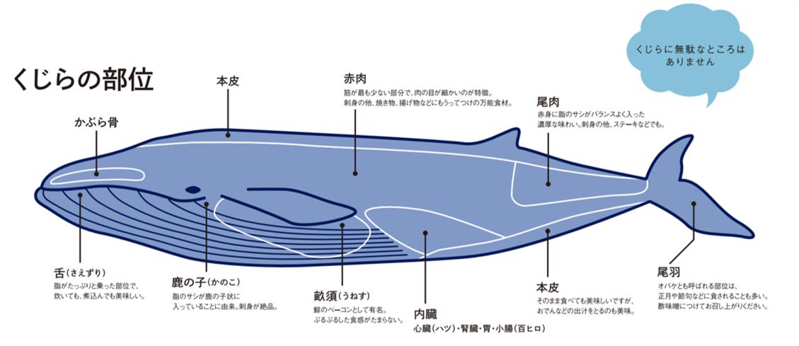 佐賀唐津特殊的鯨魚軟骨酒粕漬-松浦漬、玄海漬