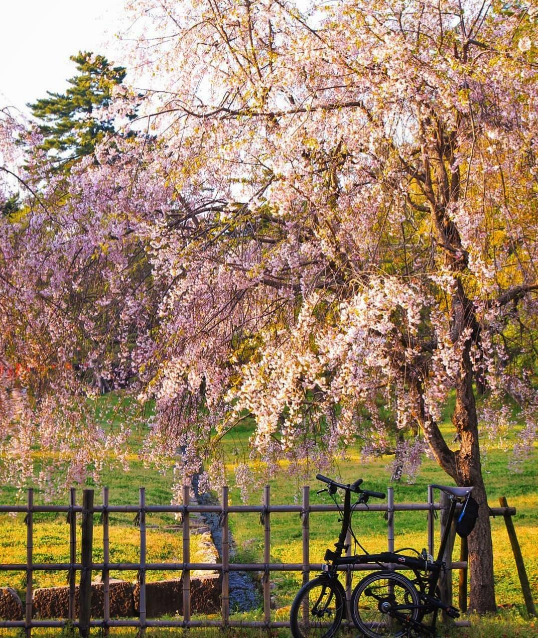 峰瘋瘋的旅行故事: 島根松江必訪國寶 -松江城,山陰地區唯一木造天守