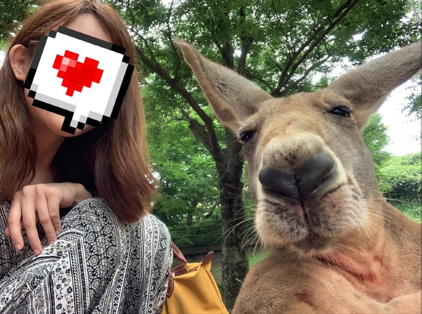日本🇯🇵大分,想親手餵獅子跟大象,還能摸袋鼠玩自拍嗎?九州自然動物園滿足你親近野生動物的願望!