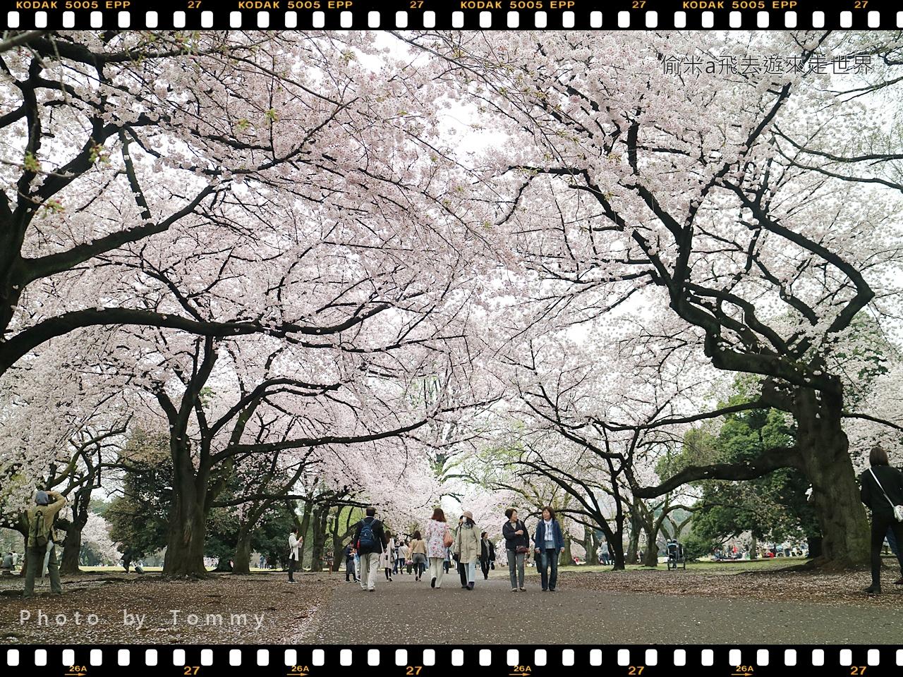 [東京賞櫻] 日本東京賞櫻人氣名所:最多櫻花品種,花期最長的新宿御苑