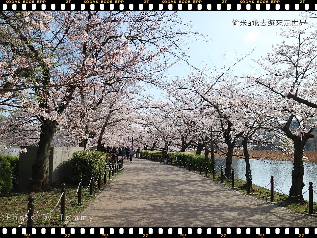 [東京賞櫻] 日本東京賞櫻景點名所:上野恩賜公園,野餐的好地方