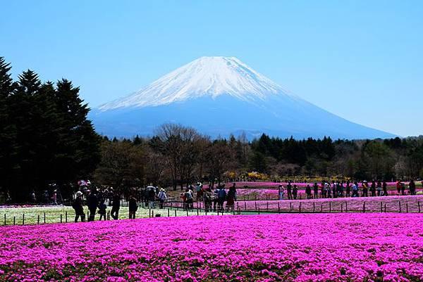 河口湖富士芝櫻祭一日遊