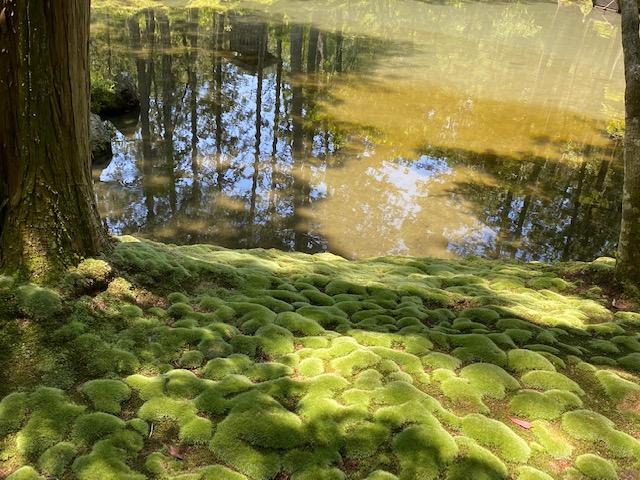西芳寺苔庭〜梅雨季節中的人間淨土 I The Moss Garden at Saihoji-Temple (Kokedera), Kyoto – 旅路日和 tabiji biyori
